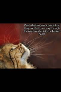 cat grief 60 best images about grief confort on