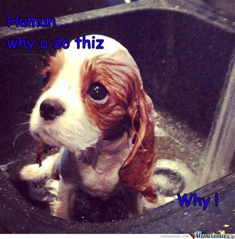 Sad Dog Meme - cute sad dog by the one meme center
