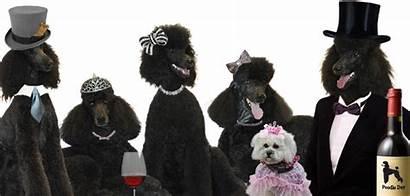 Poodle Parties Carmel Parade Poodles Events Cocktail