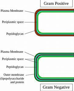 A Simple Diagram Comparing Gram