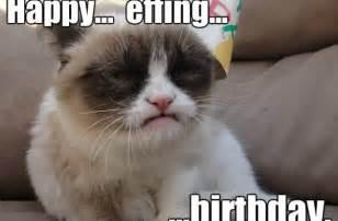 grumpy cat birthday tag for happy birthday grumpy cat litle pups