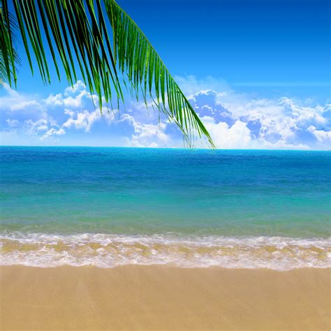 summer beach background wallpapersafari