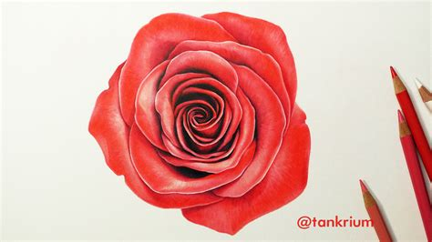 Drawing A Rose (how To Draw A Realistic Rose) Time Lapse