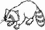 Raccoon Coloring Pages Animals Wildlife Printable Drawings Easy Playful sketch template