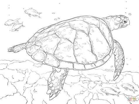 realistic hawksbill sea turtle coloring page