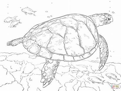 Turtle Coloring Realistic Sea Printable Hawksbill Colorear