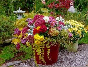 Herbstblumen Garten Winterhart : herbstblumen im k bel bilder und fotos garden balkon blumen blumen garten ideen ~ Frokenaadalensverden.com Haus und Dekorationen