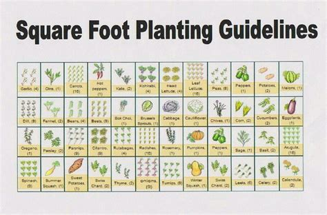 square foot planting guides gardeningpermaculture