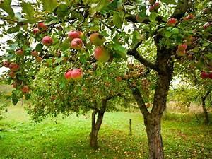 Honey  The Americans Shrank The Apple Trees   The Salt   Npr