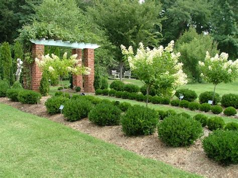 small landscape bushes 10 best small evergreen shrubs flowering and foliage enkivillage