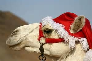 christmas camel a photo from aswan inland trekearth