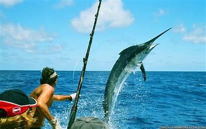 Crazy Australia Wallpapers Fishing Summer Frankenstein Marlin
