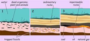 Formation Of Fossil Fuels   Formation of Coal   Chemistry ...