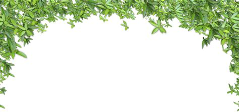 Clipart leaves leaves grass, Clipart leaves leaves grass ...