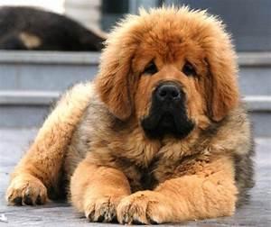 Tiberian Mastiff - Bing images