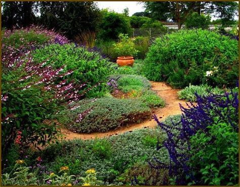 water wise gardens 28 best images about water wise gardening on pinterest gardens lodi california and front yards