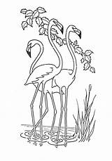 Coloring Flamingo Animal Printable Colouring Onlycoloringpages Adults Fairy Coloringdoo Books Template Pdf sketch template