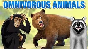 Herbivore Animals With Names | www.pixshark.com - Images ...