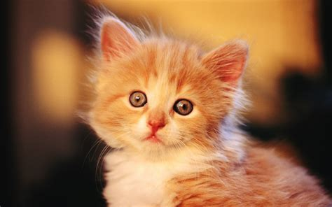 Nice Wallpapers Of Cute Baby Kitten And Baby Cats Pics And