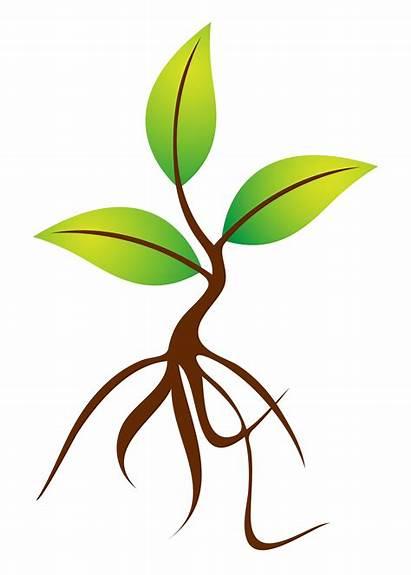 Seedling Clipart Roots Plant Tree Root Seedlings