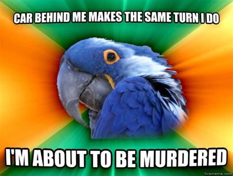 Parrot Meme - paranoid parrot meme guy