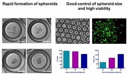 Cell Stem Spheroids Mesenchymal Glioblastoma Treating Sizes