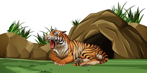 tiger sleeping  front   cave   vector