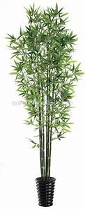 Plante D Intérieur Haute : plante interieure haute florideeo ~ Premium-room.com Idées de Décoration