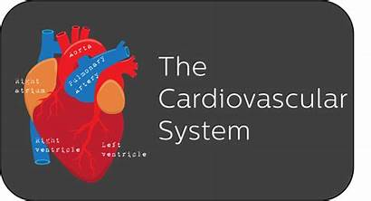 System Anatomy Cardiovascular Physiology Young Science Nervous