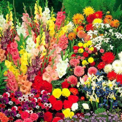 bulb gardens summertime bulb garden 100 flower bulbs buy online order yours now
