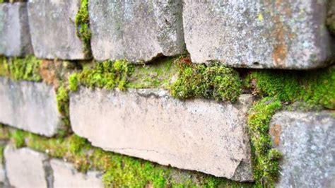 Algen Und Moos Entfernen Auf Terrasse Und Wegen by Moos Auf Steinplatten Entfernen Moos Entfernen Einfaches