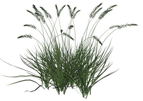 Daisy Clipart Patch Grass