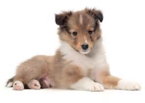 best 25 best dog breeds ideas on pinterest cute dogs