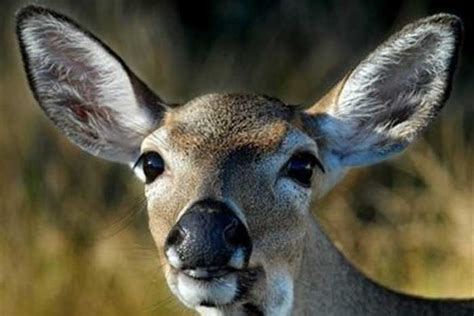 Deer Caused Human To Hit Parked Car; Human Charged With