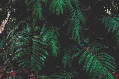 dark jungle leaves nature  creative market