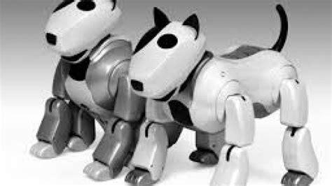 Chien En Fin De Vie Symptome by Japon Les Chiens Robots D 233 Sormais En Fin De Vie
