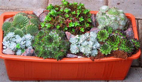 Ganzjahres Pflanzen by Bepflanzter Balkonkasten 40 Cm Sempervivum Sedum