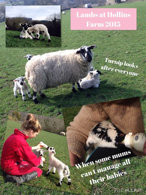 lambs farm holiday lights hollins farm blog life on our farm in eyam in the peak