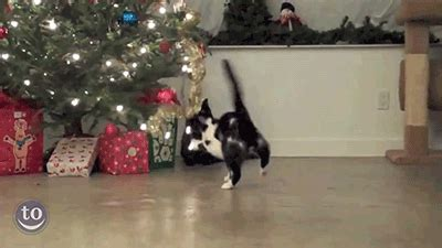 cats  christmas trees  holiday gif collection
