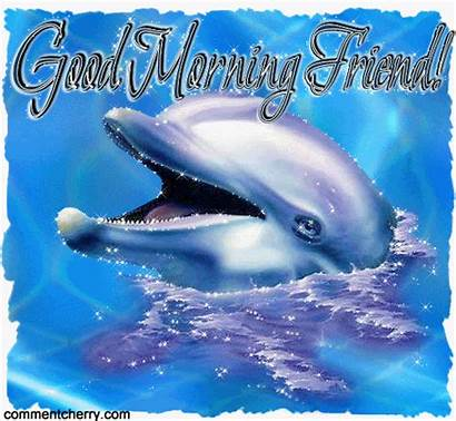 Morning Dolphin Friends Dolphins Animals Quotes Water