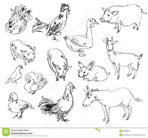 Farm Animals Drawings Farm Animals Hand Drawn Collection ...