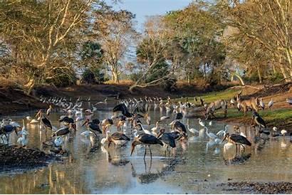 National Park Gorongosa Geographic Wildlife Geographics Cool