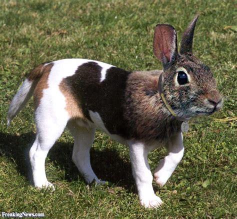 cross breed   animals