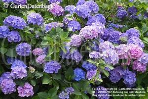 Blumen Im Juli : garten im juli was bl ht im juli bilder praxis tipps ~ Lizthompson.info Haus und Dekorationen