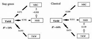 Paths Coefficients Between Yield And Yield Components  Nrc