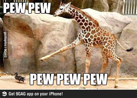Pew Pew Pew Meme - pew pew pew pew pew pew pew pew and giraffe