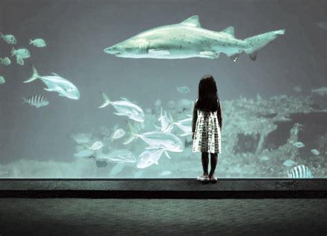 Shark Tumblr Background