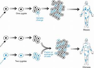 One Human, Multiple Genomes – Waiving Entropy
