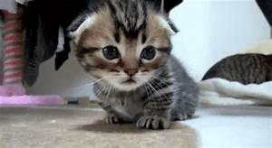 cat gif cute cat kitten gif cute kitten funny cat sleepy ...
