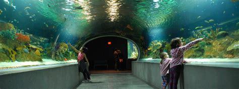 review  odysea aquarium  scottsdale az kids
